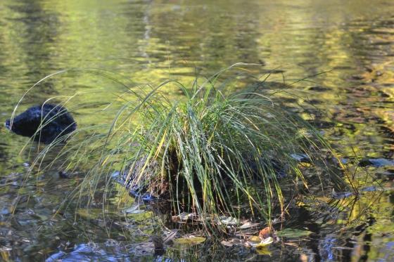 Barb Fall 2012 350