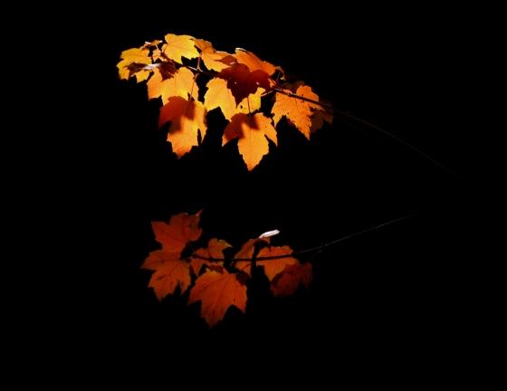 Barb Fall 2012 611a