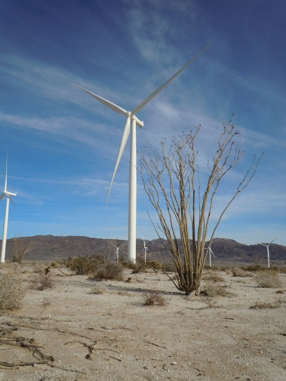 Ocotillo (the plant) next to wind turbine near Ocotillo (the town):