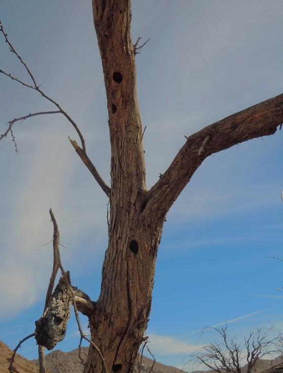blair valley tree