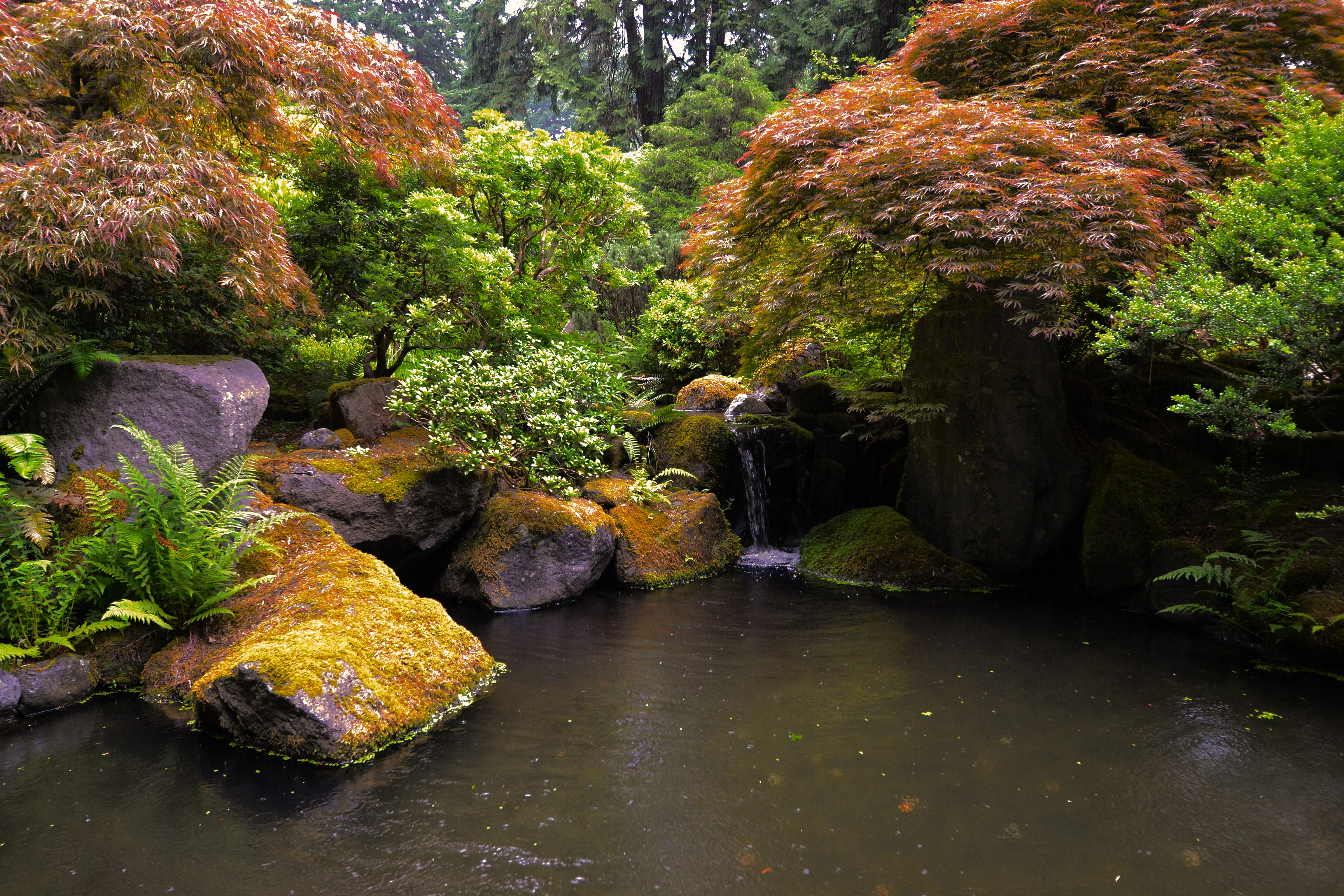 rainy day at portland s ese garden photo essay peregrination ese pool and cascade