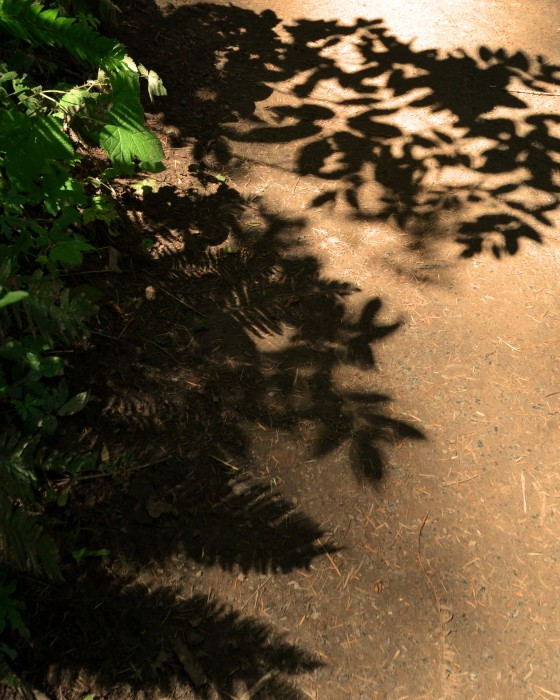 trail shadows