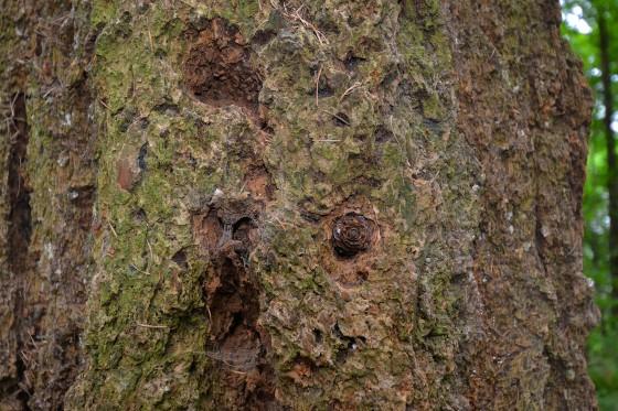 woodpecker tree4