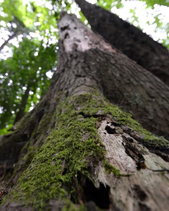 woodpecker tree6