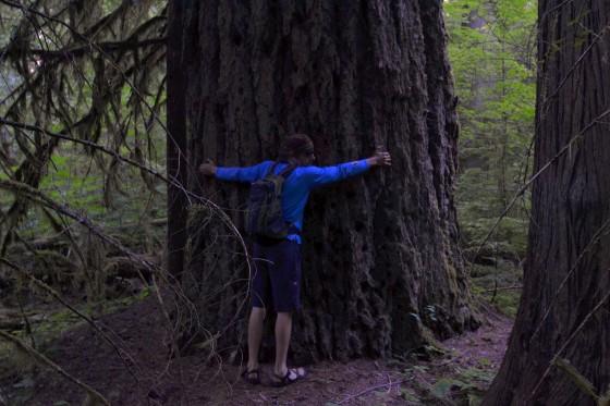 paradise big tree