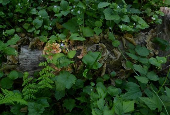 paradise fungi