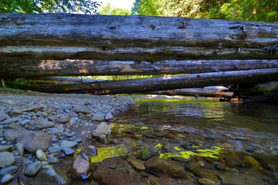 paradise logs