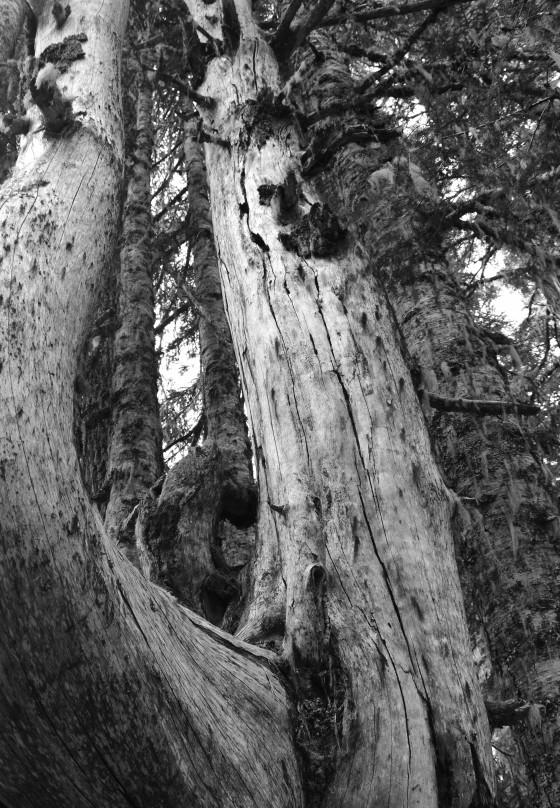 takhlak lake tree b&w