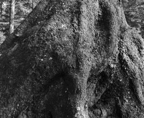 oswald west trunk 3 b & w