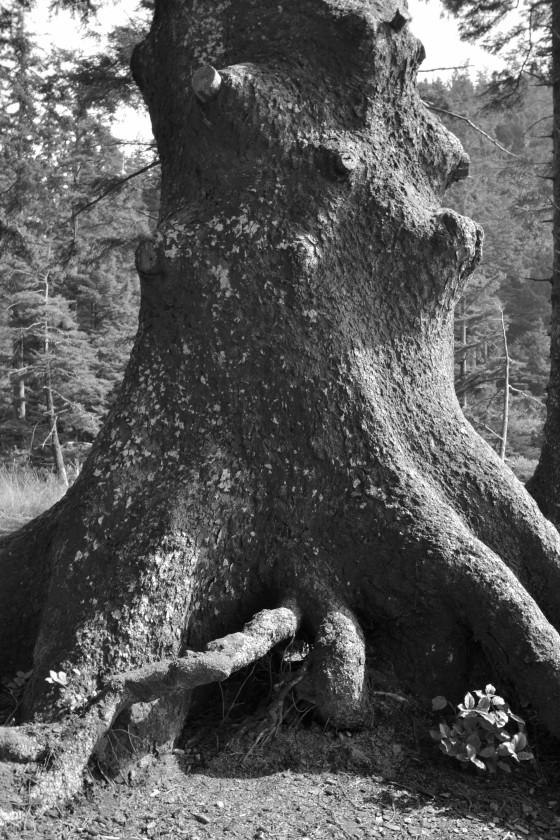 oswald west trunk 5 b &w