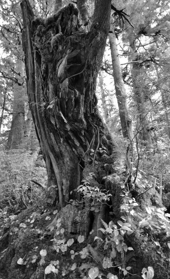 oswald west trunk b&w