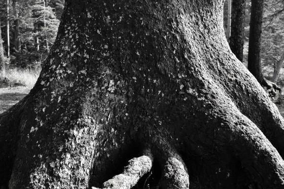 oswald west trunk b&w2