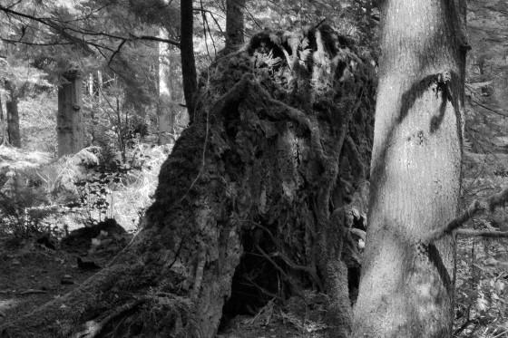 oswald west trunks