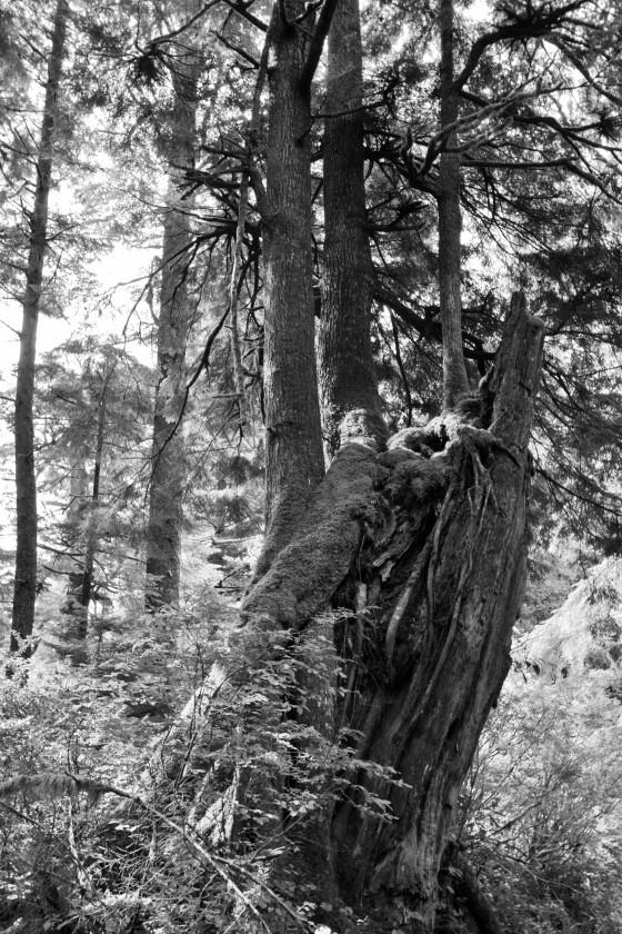oswald west trunks2 bw