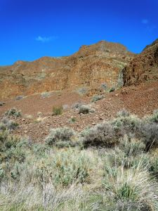Cottonwood Canyon 035